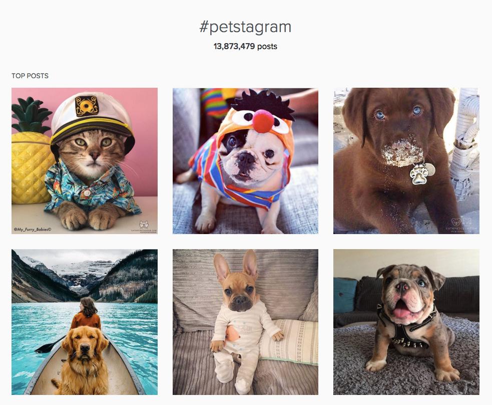 Instagram communities - #petstagram