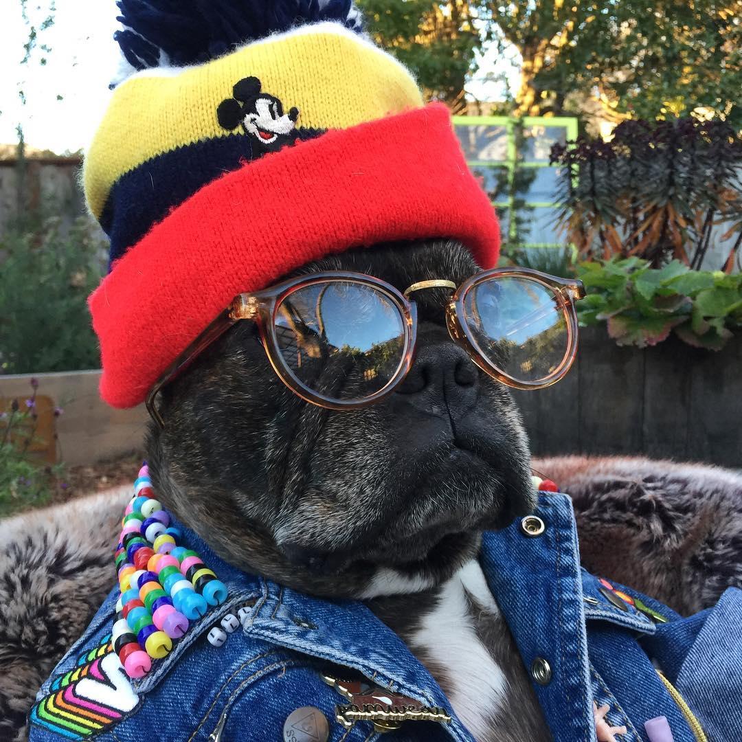 pam the pug
